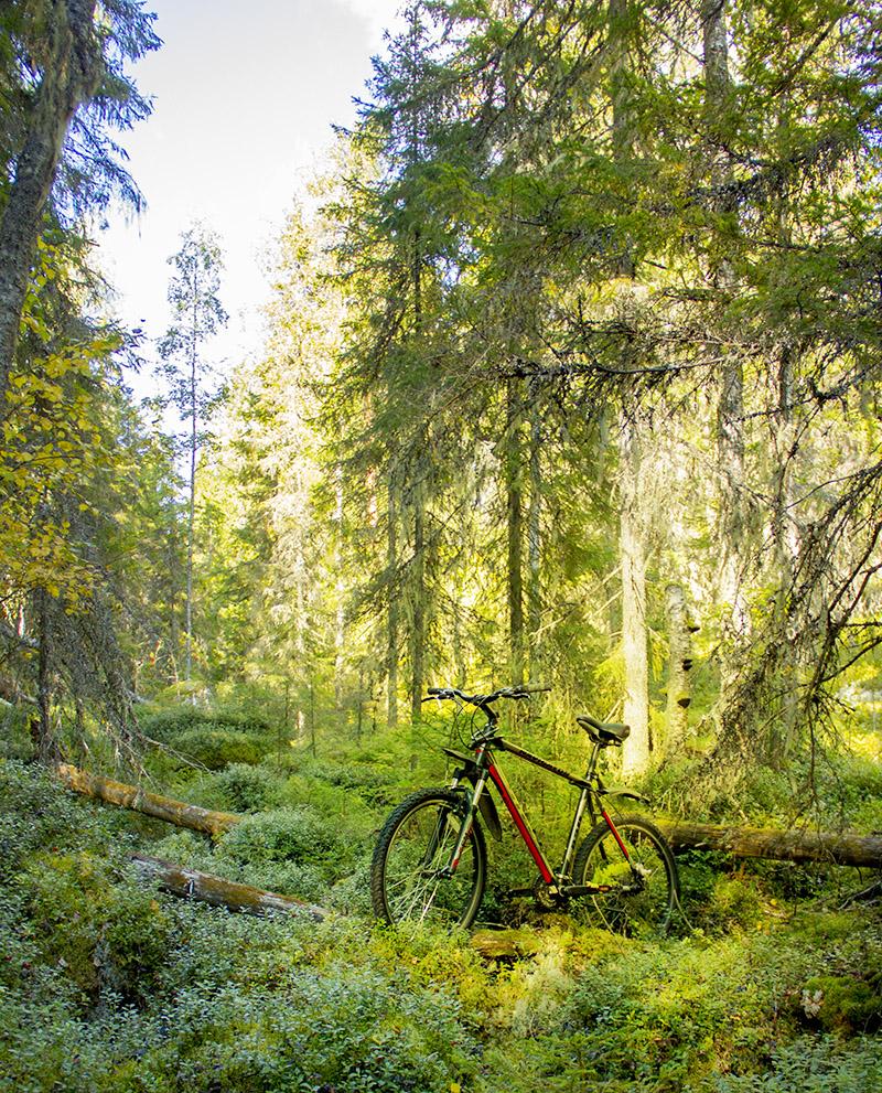 Дикий лес и велосипед